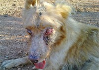 Simba the dog torturado